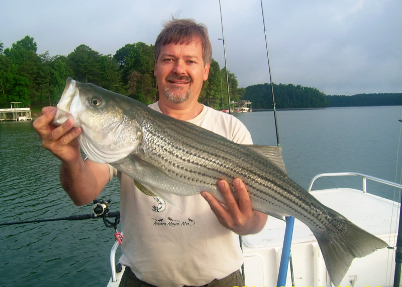 how to catch striped bass in lakes